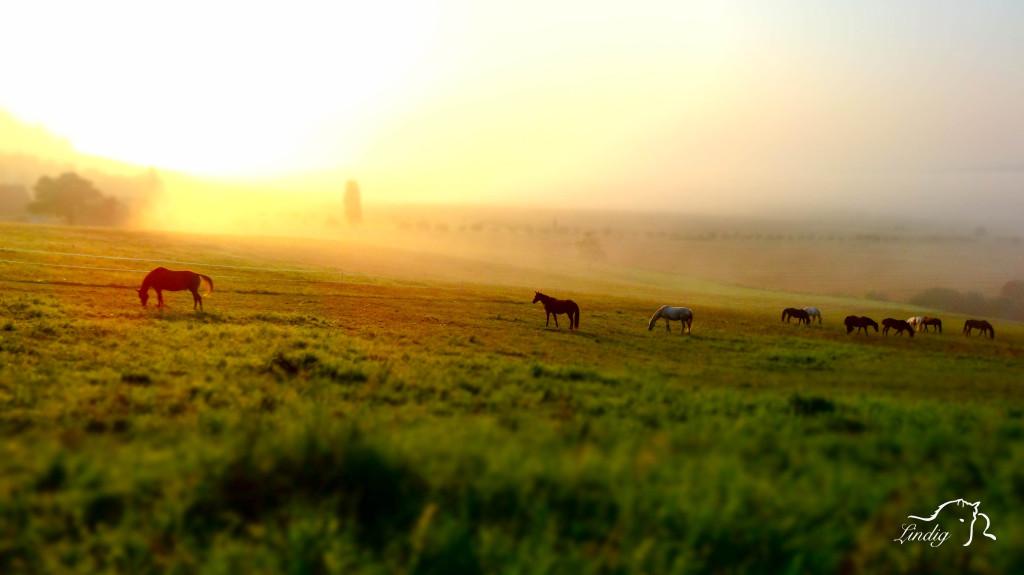 Sonnenaufgang über den Koppeln des Reiterhof Lindig Hohenfelden